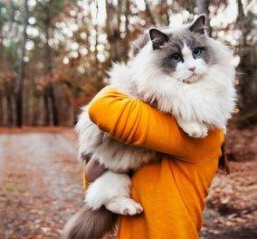 Γάτες με χνούδι σαν γούνα: Αγαπησιάρες και πανέμορφες – Δείτε τις! - Κυρίως Φωτογραφία - Gallery - Video