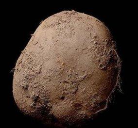 Αυτή η πατάτα πληρώθηκε στον φωτογράφο 1 εκατ. ευρώ - Κυρίως Φωτογραφία - Gallery - Video