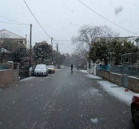 Στα λευκά υποδέχθηκε το 2016 τη Λέσβο: Χιονίζει από το πρωί - Φωτογραφίες - Κυρίως Φωτογραφία - Gallery - Video