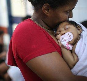 Κόκκινος συναγερμός για τον ιό Ζίκα στην Αμερική: Περιμένουν έως και 4 εκ. κρούσματα - Κυρίως Φωτογραφία - Gallery - Video
