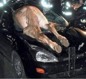Απίστευτο ατύχημα: Αυτοκίνητο τράκαρε με άλογο στη Φθιώτιδα - Κυρίως Φωτογραφία - Gallery - Video