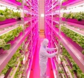 Ιαπωνία: Το πρώτο πλήρως αυτοματοποιημένο αγρόκτημα στον κόσμο θα λειτουργήσει το 2017  - Κυρίως Φωτογραφία - Gallery - Video