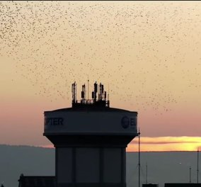 Χορογραφίες πουλιών: Εκατ. κλικς για τα εκατομμύρια πουλάκια που μοιάζουν να κάνουν μπαλέτο πριν τη δύση - Βίντεο - Κυρίως Φωτογραφία - Gallery - Video