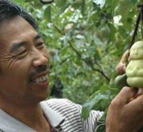 Smile! Ορίστε αχλάδια σαν ανθρωπάκια ή μικρούς Βούδες, όπως τα έφταιξε ένας Κινέζος  - Κυρίως Φωτογραφία - Gallery - Video