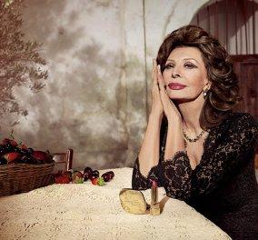 Top Woman η Σοφία Λόρεν: Στα 81 της η Ιταλίδα καλλονή έγινε η νέα μούσα των Dolce & Gabbana  - Κυρίως Φωτογραφία - Gallery - Video