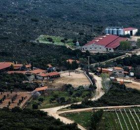 Μade in Greece: Η μεγαλύτερη βιολογική φάρμα 15.000 στρεμμάτων - Το όνειρο ζωής των Δημήτρη Μπάκου & Γιάννη Καϋμενάκη  - Κυρίως Φωτογραφία - Gallery - Video