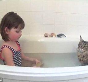 Συγκινητικό Story: Μία γάτα βοηθά κοριτσάκι με αυτισμό να μιλήσει  - Κυρίως Φωτογραφία - Gallery - Video