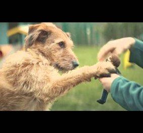 Θέλω μόνο να είμαι μαζί σου - Η συγκινητική διαφήμιση για την υιοθεσία κατοικίδιων στην Αγγλία  - Κυρίως Φωτογραφία - Gallery - Video