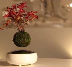 Ιπτάμενα bonsai: Τα δημοφιλέστατα γιαπωνέζικα φυτά τώρα πετούν ψηλά & είναι cute   - Κυρίως Φωτογραφία - Gallery - Video