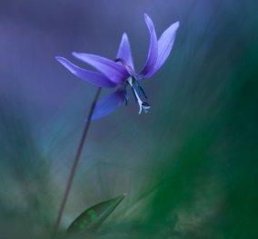 17 φωτογραφίες με τα πιο σπάνια λουλούδια της άνοιξης - ''Μαγικά'' κλικς γεμάτα χρώμα που θα σας ενθουσιάσουν - Κυρίως Φωτογραφία - Gallery - Video