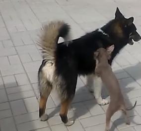 Το πιο ξεκαρδιστικό βίντεο με τα πιο αστεία Fails με ζώα - Δείτε το!  - Κυρίως Φωτογραφία - Gallery - Video