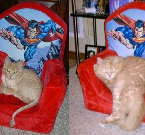 Εικόνες πριν και μετά που δείχνουν την επίδραση ενός καλού σπιτικού στις γάτες - Κυρίως Φωτογραφία - Gallery - Video