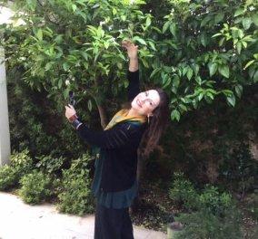 Σας συστήνω τον κήπο μου: Καμέλιες, άνθη πορτοκαλιάς & φασκόμηλου έσκασε μύτη η λεβάντα, βότανα για την κουζίνα μου   - Κυρίως Φωτογραφία - Gallery - Video