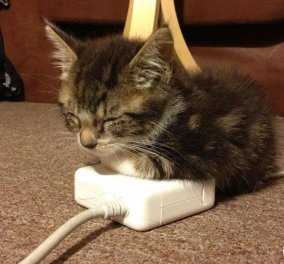 Τεχνολογία vs γάτες: Εικόνες που μας δείχνουν πόσο έχει αλλάξει η ζωή τους    - Κυρίως Φωτογραφία - Gallery - Video