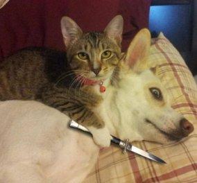 Γάτες εναντίον Σκύλων σημειώσατε... 1! Τα αξιαγάπητα αιλουροειδή πρώτα σε προτίμηση στην Ευρώπη! - Κυρίως Φωτογραφία - Gallery - Video