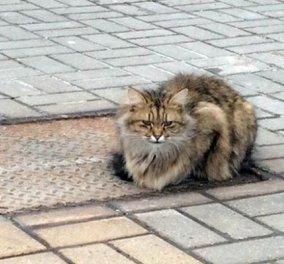 Pet story of the day: Γάτα περιμένει τον ιδιοκτήτη της για πάνω από 1 χρόνο - Ο Χάτσικο σε αιλουροειδές  - Κυρίως Φωτογραφία - Gallery - Video