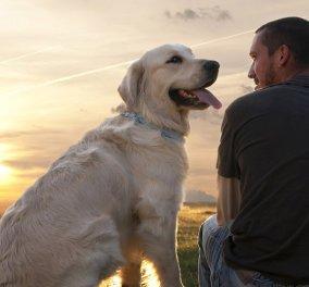 Η μαγική σχέση των σκύλων με τους ανθρώπους - Η διαφήμιση που συγκίνησε τους φιλόζωους όλου του κόσμου - Κυρίως Φωτογραφία - Gallery - Video