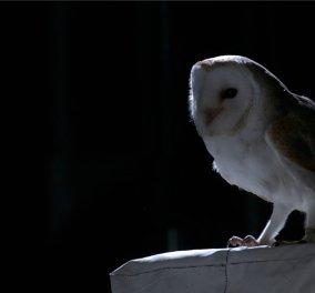 Μοναδικό βίντεο: Αυτός είναι ο ήχος που κάνουν τα πουλιά όταν πετάνε - Κυρίως Φωτογραφία - Gallery - Video
