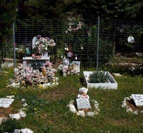 """Κοιμητήριο μικρών ζώων ο Άγιος Φραγκίσκος: Έξω από την Μαλακάσα """"κοιμούνται"""" για πάντα τα αγαπημένα μας κατοικίδια   - Κυρίως Φωτογραφία - Gallery - Video"""