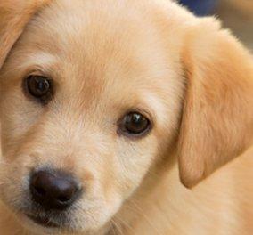 Τα 44 πιο famous ονόματα σκύλων! - Κυρίως Φωτογραφία - Gallery - Video