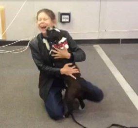 Βίντεο: Μοναδική στιγμή που η Debi ξαναβρίσκει τον σκύλο της τον Δια μετά από 2 χρόνια  - Κυρίως Φωτογραφία - Gallery - Video