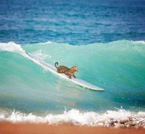 """Γάτα & αθλητισμός: 11 αστείες εικόνες που θα σας κάνουν να """"δακρύσετε"""" από τα γέλια  - Κυρίως Φωτογραφία - Gallery - Video"""