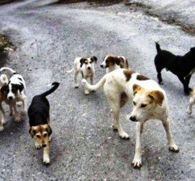 Αγέλη σκύλων στον Τύρναβο σκορπά τον τρόμο σε παιδιά και αγρότες - Κυρίως Φωτογραφία - Gallery - Video
