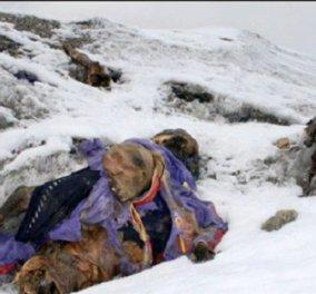 Βρήκαν τα πτώματα του Άλεξ & του Ντέϊβιντ θαμένα στον πάγο 16 ολόκληρα χρόνια μετά την εξαφάνιση τους στο Έβερεστ - Κυρίως Φωτογραφία - Gallery - Video