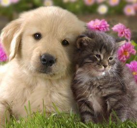 Σαουδική Αραβία: Υψηλόβαθμος κληρικός απαγορεύει τις φωτογραφίες με γάτες, σκύλους άκομη και λύκους - Κυρίως Φωτογραφία - Gallery - Video