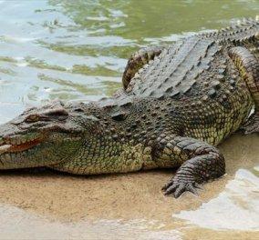 """Κροκόδειλος """"εξαφάνισε"""" 46χρονη γυναίκα στην Αυστραλία: Πήγε να κάνει νυχτερινό μπάνιο... - Κυρίως Φωτογραφία - Gallery - Video"""