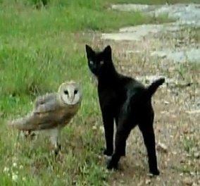 Μια ασυνήθιστη φιλία: Γάτα και κουκουβάγια παίζουν και το βίντεο γίνεται viral - Κυρίως Φωτογραφία - Gallery - Video