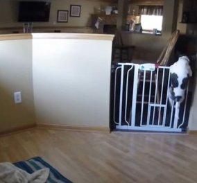 Γελαααααμε δυνατά: Ιδού τι κάνουν τα αγαπημένα μας κατοικίδια όταν μένουν μόνα στο σπίτι - Κυρίως Φωτογραφία - Gallery - Video