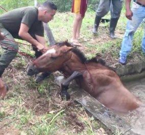 Καρέ- καρέ η διάσωση ενός όμορφου αλόγου από βέβαιο θάνατο - Η γενναία ιδέα ενός άνδρα- Φώτο   - Κυρίως Φωτογραφία - Gallery - Video