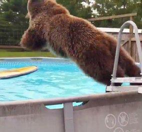 Αρκουδίτσα 3 ετών ζεστάθηκε και πήγε για βουτιές σε πολυτελή πισίνα - Μετά ανέβηκε και στο δέντρο... - Κυρίως Φωτογραφία - Gallery - Video