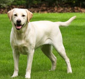 Video of the day: Τίποτα στο κόσμο δεν είναι πιο χαρούμενο & ενθουσιασμένο από αυτόν τον σκυλάκο - Κυρίως Φωτογραφία - Gallery - Video