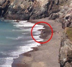 Βίντεο: Ο Τουρίστας σώζει τεράστιο καρχαρία νομίζοντας ότι ήταν δελφίνι   - Κυρίως Φωτογραφία - Gallery - Video