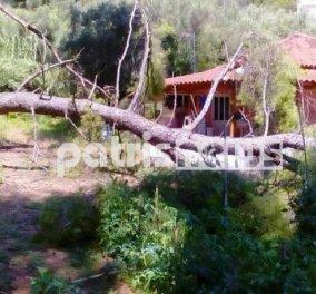 Ολυμπία: Νύχτα τρόμου για τριμελή οικογένεια από πτώση τεράστιου πεύκου στο σπίτι τους - Κυρίως Φωτογραφία - Gallery - Video