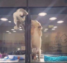 Pet Story of the day:Γατάκι δραπετεύει θεαματικά για να κάνει παρέα με σκυλάκι μοναχούλη του - Κυρίως Φωτογραφία - Gallery - Video