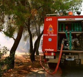 Υπό έλεγχο έθεσε η πυροσβεστική την πυρκαγιά στις Βασιλειές Ηρακλείου - Κυρίως Φωτογραφία - Gallery - Video