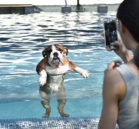 Μια πισίνα μόνο για σκυλιά: Χαρούμενες φωτογραφίες από μια νέα τρελή ιδέα από την Κίνα! - Κυρίως Φωτογραφία - Gallery - Video