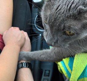 Συγκίνηση: Ο ετοιμοθάνατος γάτος κρατάει το χέρι του αφεντικού για το τελευταίο ταξίδι ...στον κτηνίατρο   - Κυρίως Φωτογραφία - Gallery - Video