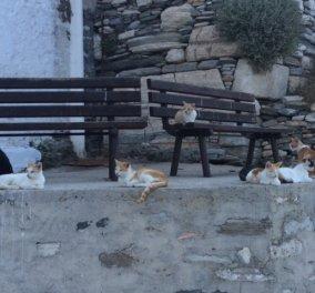 Αποκλ: Όταν οι γάτες της Σίφνου ρεμπελιάζουν μέσα στο Κάστρο αγναντεύοντας το Αιγαίο απλά νιαουρίζετε από ευχαρίστηση  - Κυρίως Φωτογραφία - Gallery - Video