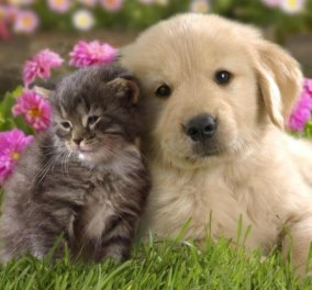 «Μέχρι να αγαπήσεις ένα ζώο, η ψυχή σου δεν αφυπνίζεται εντελώς»: «Κατοικίδια εν Δράσει 2016» το φεστιβάλ για κατοικίδια επιστρέφει! - Κυρίως Φωτογραφία - Gallery - Video
