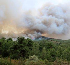 Θάσος: Η άφιξη του Αλέξη Τσίπρα με Σινούκ - Εικόνες απόλυτης καταστροφής από τη μεγάλη φωτιά  - Κυρίως Φωτογραφία - Gallery - Video