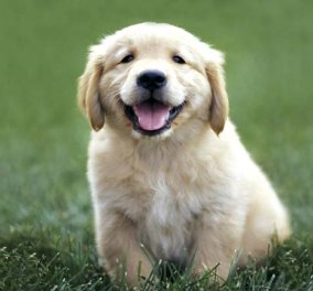 Οι σκύλοι μυρίζουν πράγματι τον καρκίνο: Η νέα έρευνα για την δυνατή μύτη των αγαπημένων τετράποδων  - Κυρίως Φωτογραφία - Gallery - Video