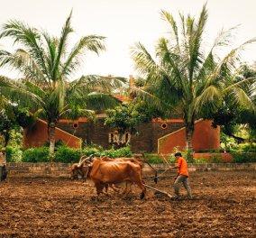 Η πιο εντυπωσιακή φάρμα του κόσμου μοιάζει με κάστρο και βρίσκεται στην Ινδία  - Κυρίως Φωτογραφία - Gallery - Video