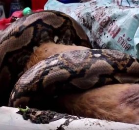 Ανατριχιαστικό βίντεο: Έπιασε πύθωνα να καταπίνει το σκύλο της  - Δεν θα πιστεύετε τι έκανε - Κυρίως Φωτογραφία - Gallery - Video