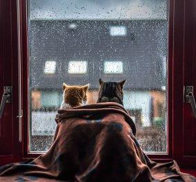 Φωτογράφος παίρνει υπέροχες πόζες τις γατούλες του την ώρα που βρέχει μπροστά στο παράθυρο - Κυρίως Φωτογραφία - Gallery - Video