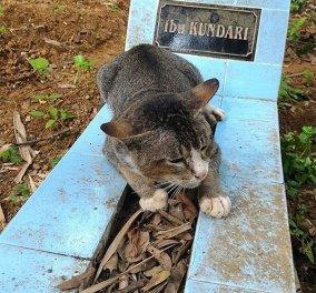 Αυτή η αφοσιωμένη γατούλα πέρασε ένα χρόνο θρηνώντας πάνω από τον τάφο της αγαπημένης της ιδιοκτήτριας  - Κυρίως Φωτογραφία - Gallery - Video