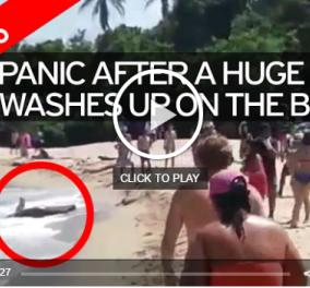 Βίντεο: Ερωτευμένα πιτσουνάκια πήγαν για μπάνιο & είδαν κροκόδειλο να βγαίνει από τη θάλασσα - Κυρίως Φωτογραφία - Gallery - Video